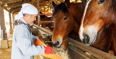 馬と対話し育てる畜産家の技術の結晶