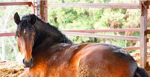 『寝転がる馬』の秘密